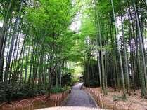 【竹林の小径】桂川に沿う遊歩道。