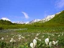 【栂池自然園】 尾瀬沼の倍を有する大湿原(6~10月開園)