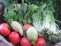自家農園の元気な野菜たち、太陽の恵みがいっぱい!