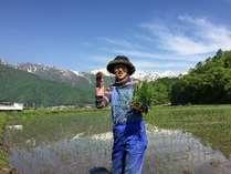 白馬の大地と水で作った一の倉荘のお米を是非どうぞ