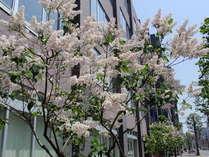 写真:イーホテル 札幌(旧 札幌ドリームホテル)