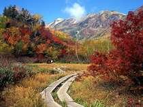 栂池自然園と紅葉