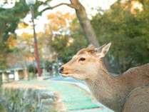 奈良といえばの鹿♪可愛い鹿に出会える奈良公園へは徒歩約5分☆