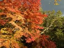 紅葉:10月半ばから11月んが見ごろ。