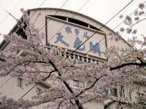 天竜閣の春は桜に囲まれる