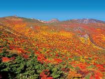 鮮やかな紅葉が楽しめる安達太良山