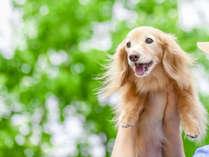 愛犬と一緒に温泉&グルメ旅♪