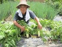 百姓ならおてのもの!まかせんしゃい♪~自家野菜の収穫風景~