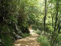 癒しの路をガイドとともに♪爽やかな朝の風を感じるセラピーロード散策★清流の膳★
