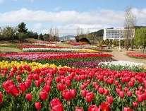 国営明石海峡公園からホテルをのぞむ (春)