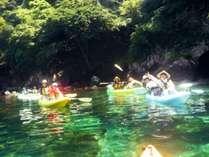 新緑と湖面の光がキラキラ♪カヤックで若狭湾の大自然満喫!