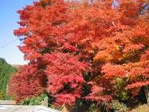 【11月限定】特典付☆紅葉と秋の会席得々プラン☆じゃらん限定
