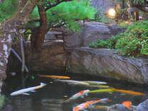 【お庭】錦鯉の泳ぐ池に、青葉若葉の木々が緑影を落としています