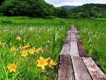 車で5分の沼の原湿原では四季の花々が見られます