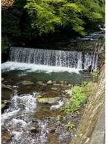 宿の前の川・・6月下旬に天然のほたる