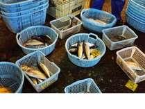 湯河原の漁港・・福浦漁港で地魚の仕入れ