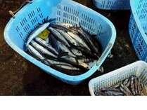 福浦漁港の地魚たち・・・