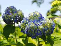 *【露天風呂】露天風呂から見える庭では、季節の花が咲きます