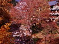 『外観』(紅葉が鮮やかな秋の風景)