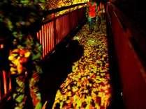 【早期予約割】14日前の予約がお得!秋のロマンチック宿泊プラン(夕朝食付)