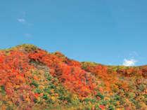 【紅葉】鮮やかに燃ゆる山の情景は西館和室から望むことができます。