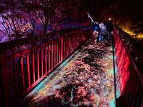 【定山渓ネイチャールミナリエ】夜の幻想散策