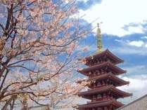 浅草寺の桜の季節