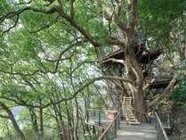 樹齢300年超のクスノキの上に佇むツリーハウス