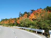 国道299号沿いの紅葉
