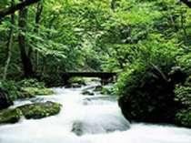 【奥入瀬渓流】新緑