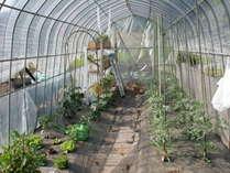 春野菜が育っています。