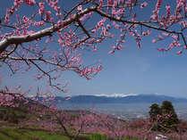 ≪春の絶景≫南アルプスを背に咲く桃の花。見ごろは4月上旬から中旬です♪
