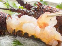 【 一品料理 】 伊勢海老のお刺身!朝獲れ鮮度で食す一級品素材は絶品です♪