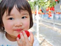 甘~い真っ赤ないちごをたくさん食べられて大満足♪