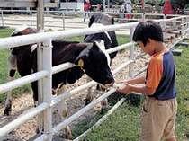 【淡路島牧場】 ほんわかのんびりしたいあなたへ。無料の牛乳がちょっと嬉しい。