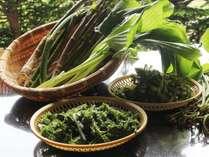 山菜 イメージ