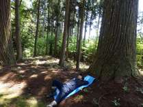 【岐阜県内初!森林セラピー体験プラン】大自然を体感!心身ともにリフレッシュしましょう♪