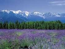 『白馬Alps花三昧』雄大な自然の中にいろとりどりに咲く高山植物や山野草の花々をお楽しみ下さい!