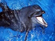 マリンパーク イルカ