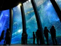 大海原に生きる群れと輝きの魚たち
