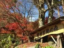 秋の彩りを愛でに紅葉狩りの旅☆夕食は板長おすすめの霜降り佐賀牛を囲炉裏端でご堪能ください♪