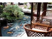 池に面した喫茶コーナー窓際から鯉に餌をあげることもできます