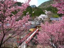 庭園内に架かる朱色の亀橋と桜のピンクが美しいコントラスト