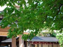 新緑が美しい季節、和倉の街も緑が綺麗です♪