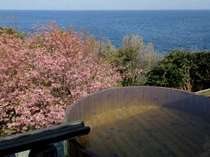 絶景の野天風呂では毎年春に海と桜を望むお花見露天をお愉しみになれます。(2月下旬~3月上旬頃)