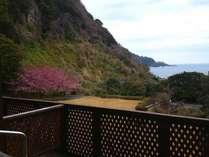 本館客室のテラスでは芝生の庭園の先に広がる海を一望!例年2月下旬~3月中旬頃には桜の姿も♪