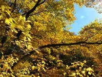玉原高原の黄