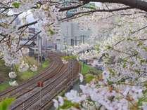 花園橋(春)