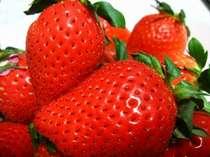 【期間限定】秩父の美味し~いイチゴを食べ放題付☆1泊2食付プラン【送迎あり】