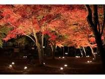 【秋プラン】秩父の秋を満喫!長瀞・紅葉ライトアップへご案内☆送迎付き☆1泊2食付プラン